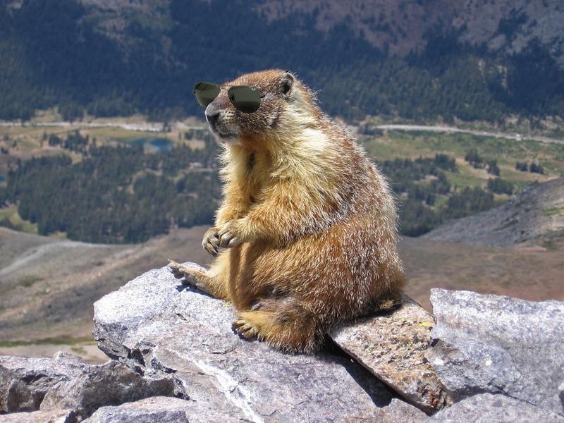 Marmot-edit1-cool